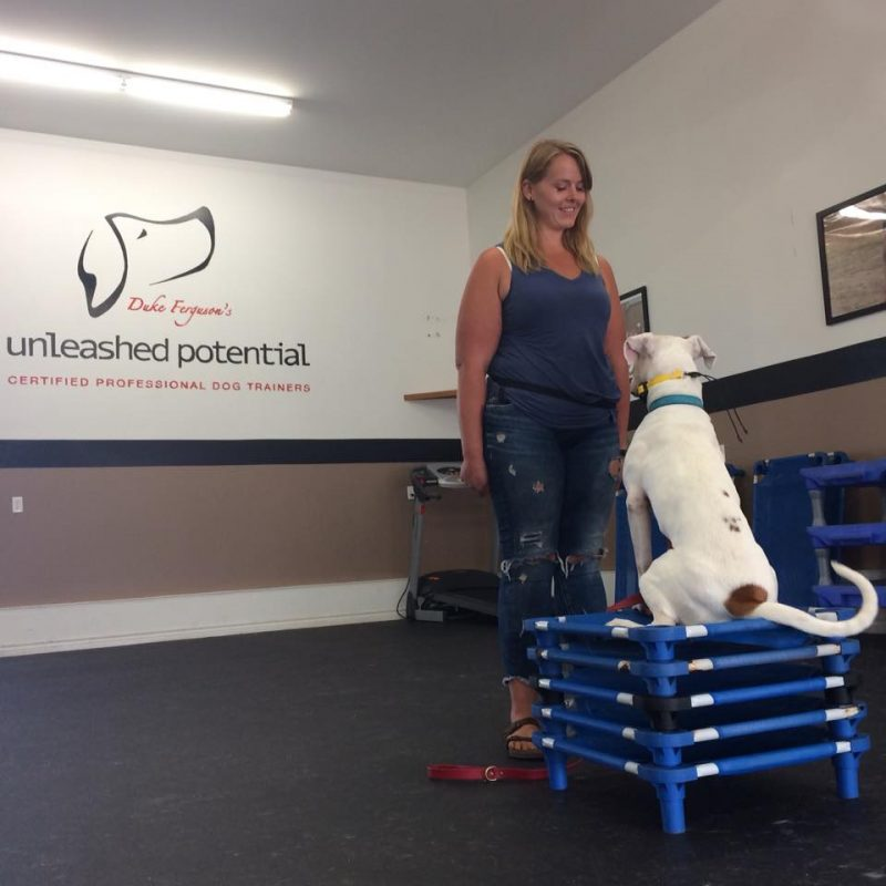 Dog Trainer in the Orange County